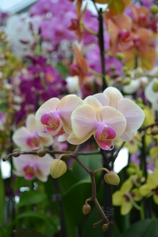 gallery/attachments-Image-orchidee